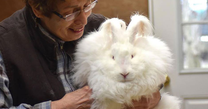 woman holding white fluffy rabbit