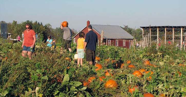 a large pumpkin patch