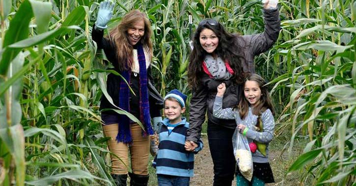 people in a corn maze
