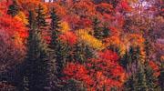falll foliage in the adirondacks