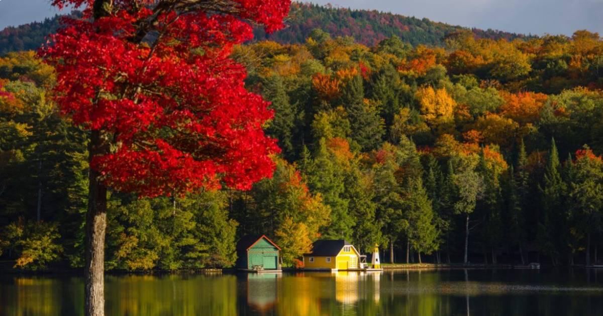 fall scene by lake