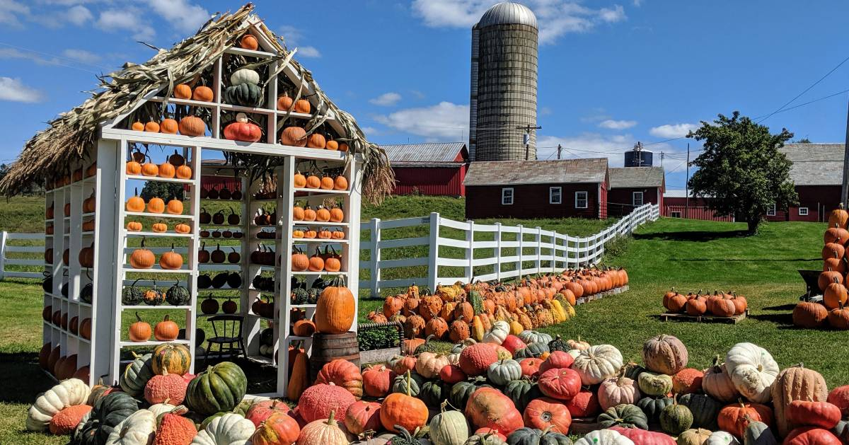 pumpkin and gourd display at a farm