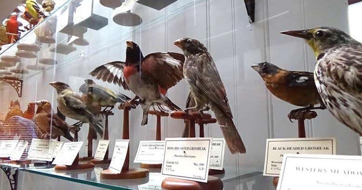 birds on display in museum