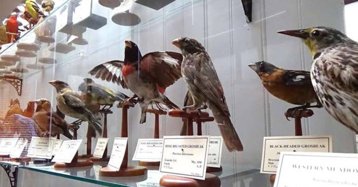 birds on display behind a glass case in a museum