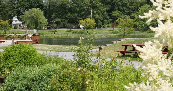 plants and observation deck overlooking hovey pond
