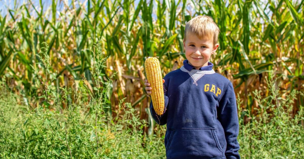 kid holding corn by corn