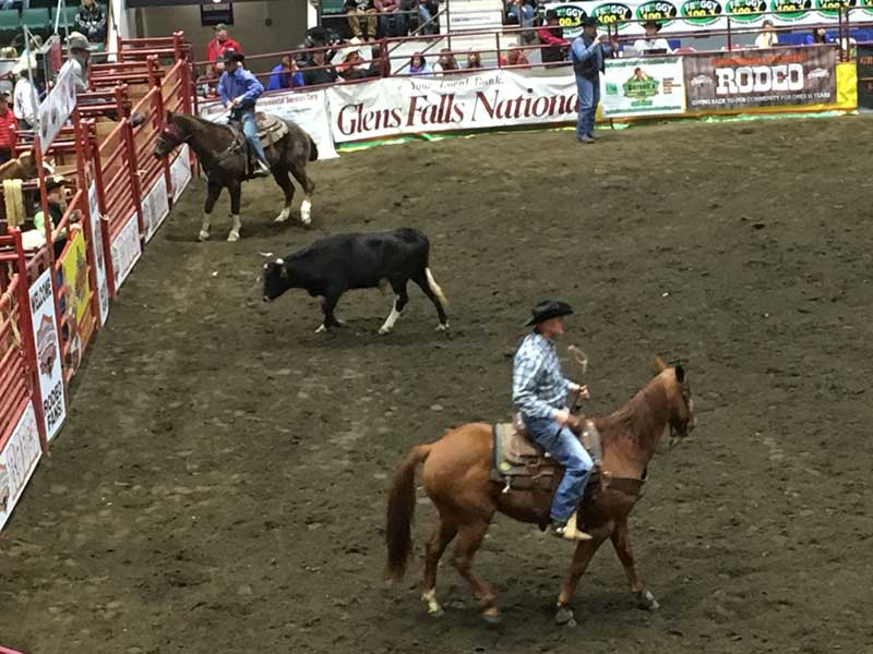 Cow rangling at the rodeo