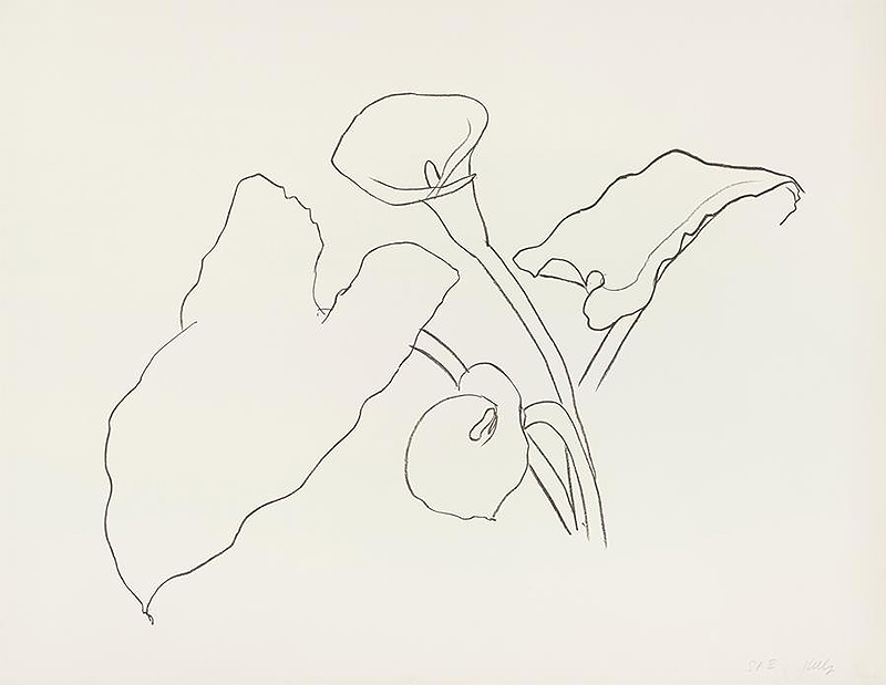 Lithograph of a Calla Lily