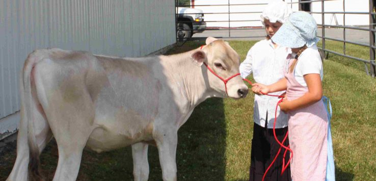two girls in bonnets and dresses lead a calf in a pen