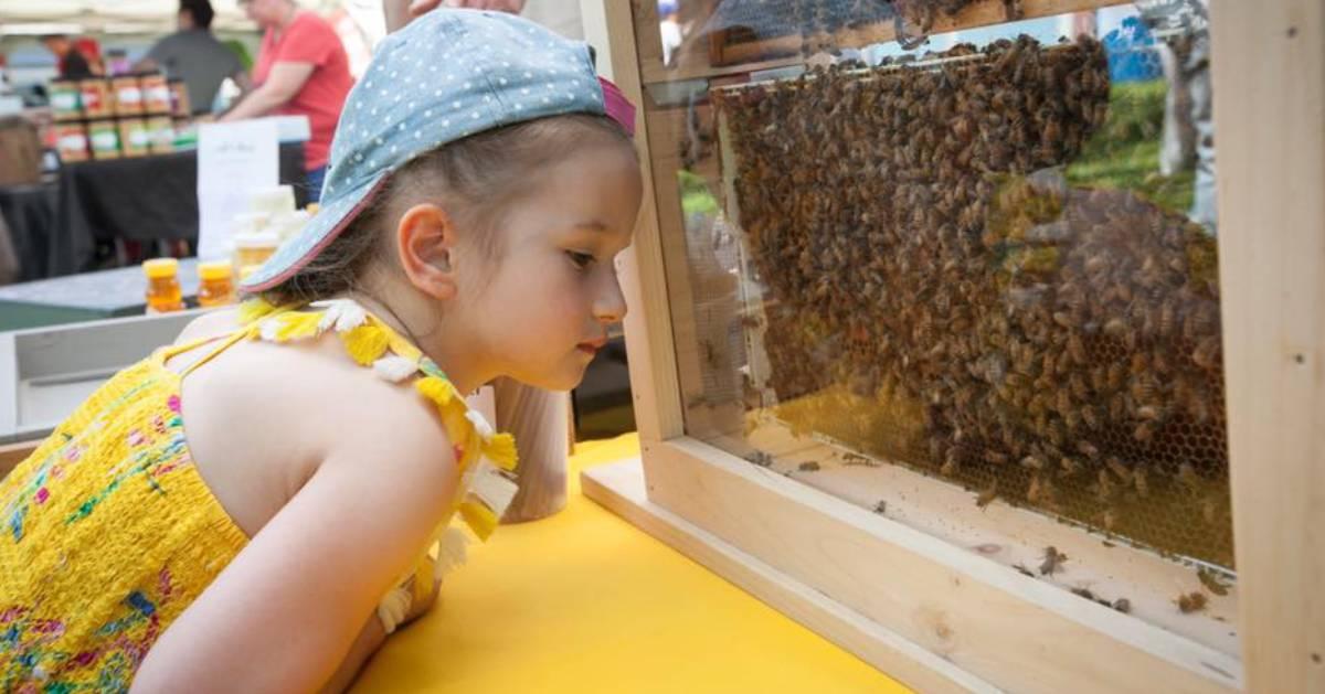 kid looking at honeybees