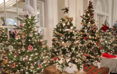 christmas trees at the north country festival of trees
