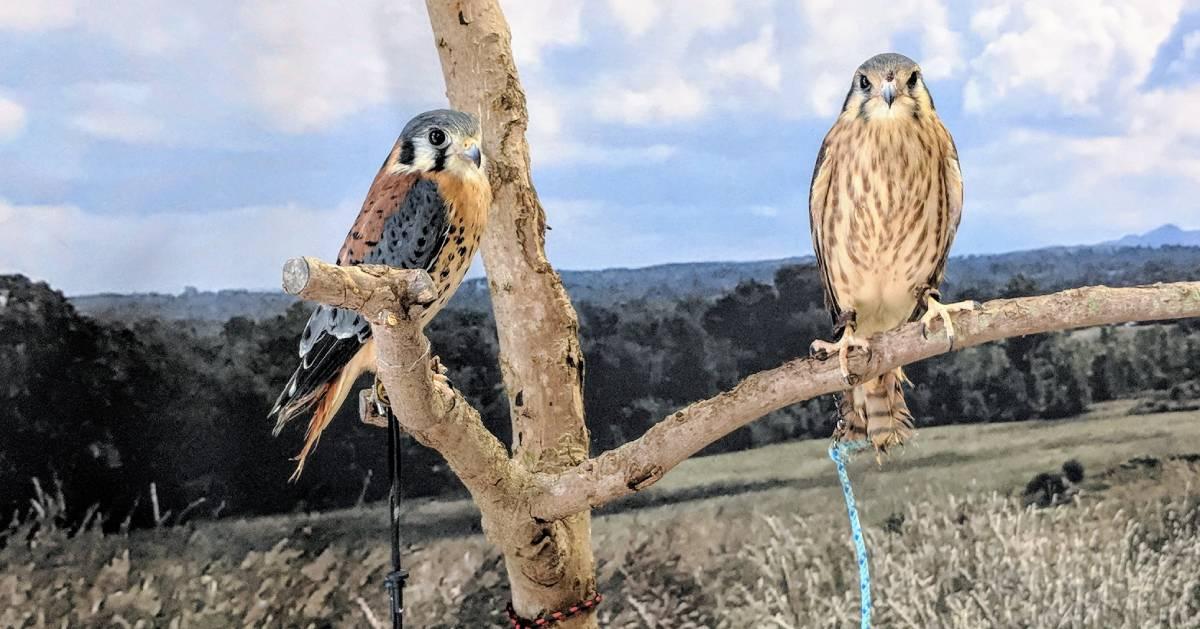 raptors on a branch