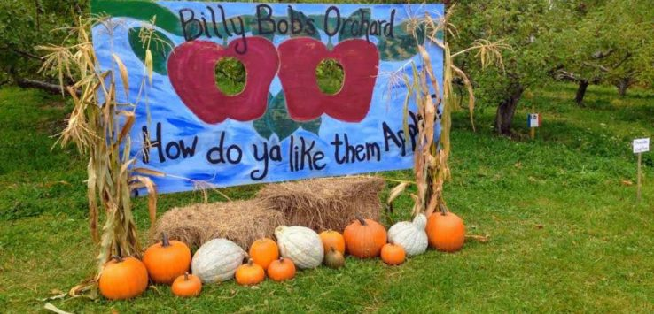 Billy Bob Apples sign