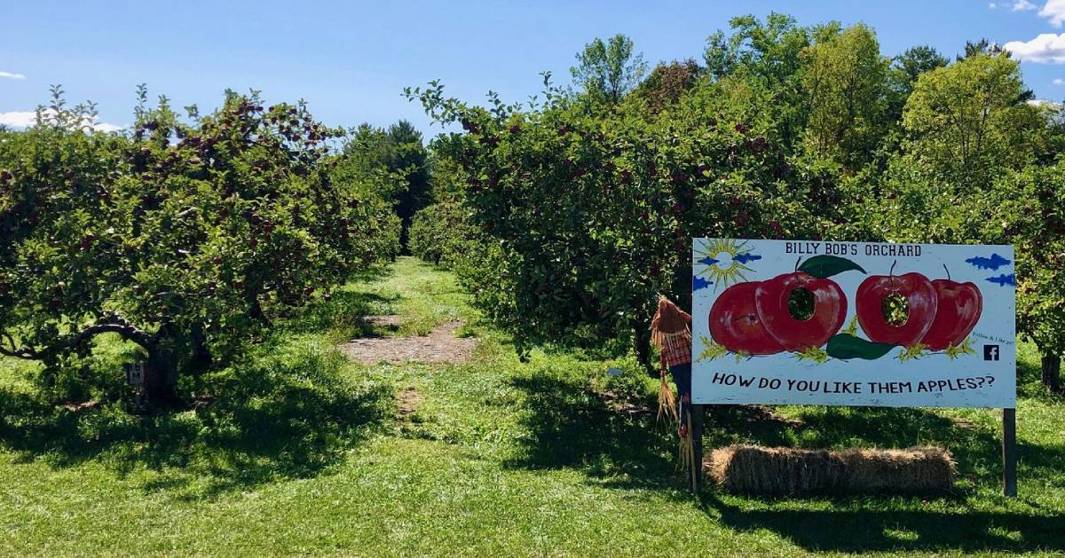 Billy Bob Orchard sign and orchard